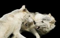Goodbye to EndangeredSpecies