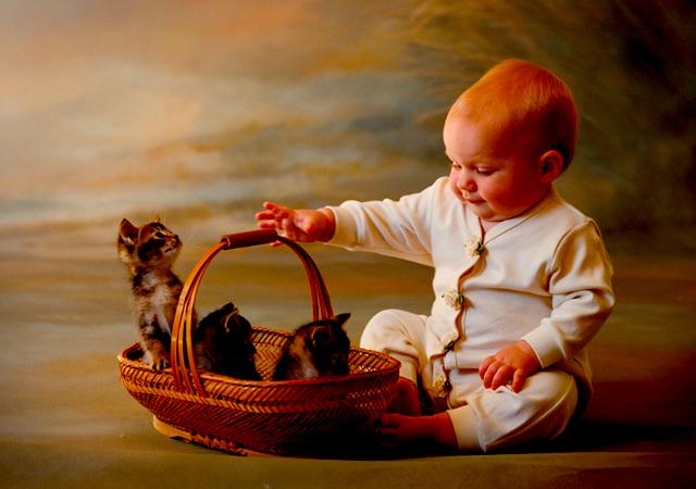 Baby_kittens