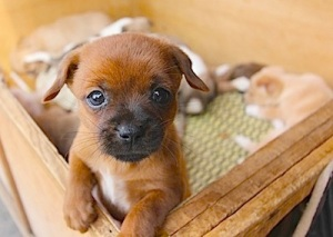 PuppyiCrib2